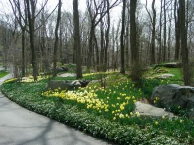 bkla studio - woodland garden
