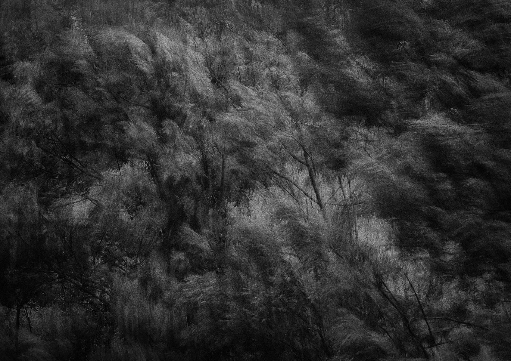 protasiuk - The Narrow Daylight 9
