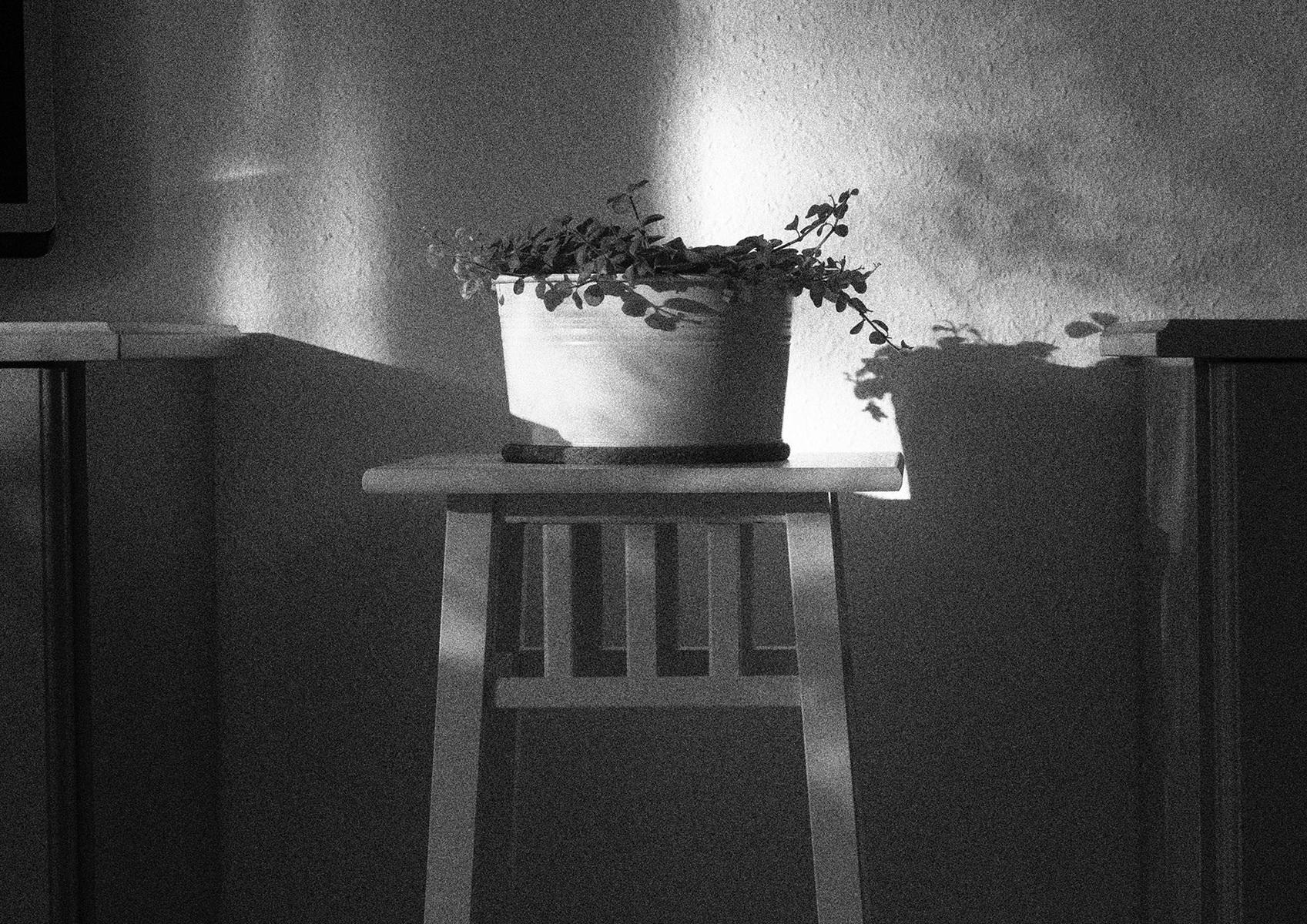 protasiuk - The Narrow Daylight 3