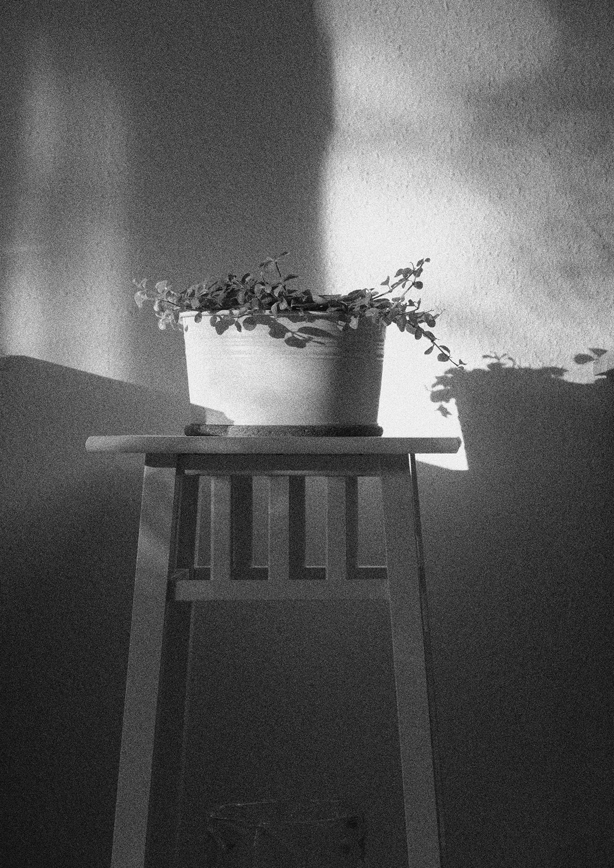 protasiuk - The Narrow Daylight 1