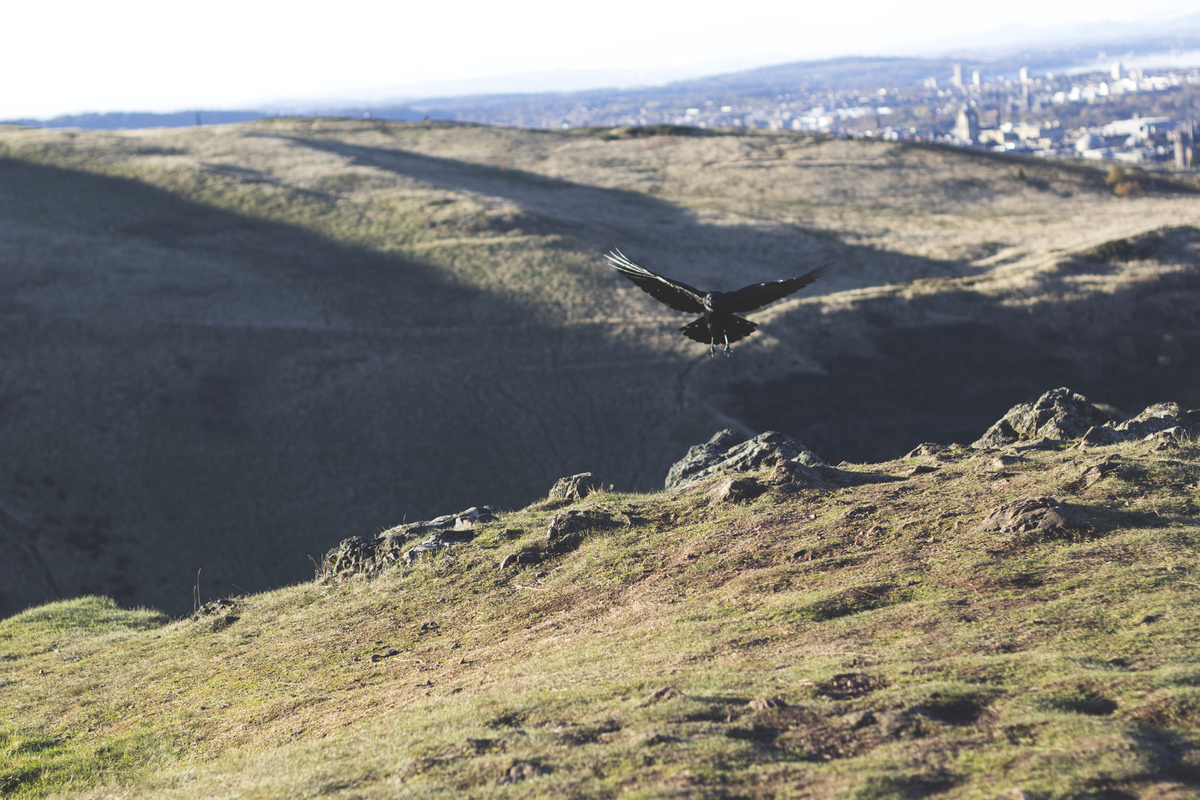 Photography by Ine PH. - A crow over Arthurs Seat // 2013