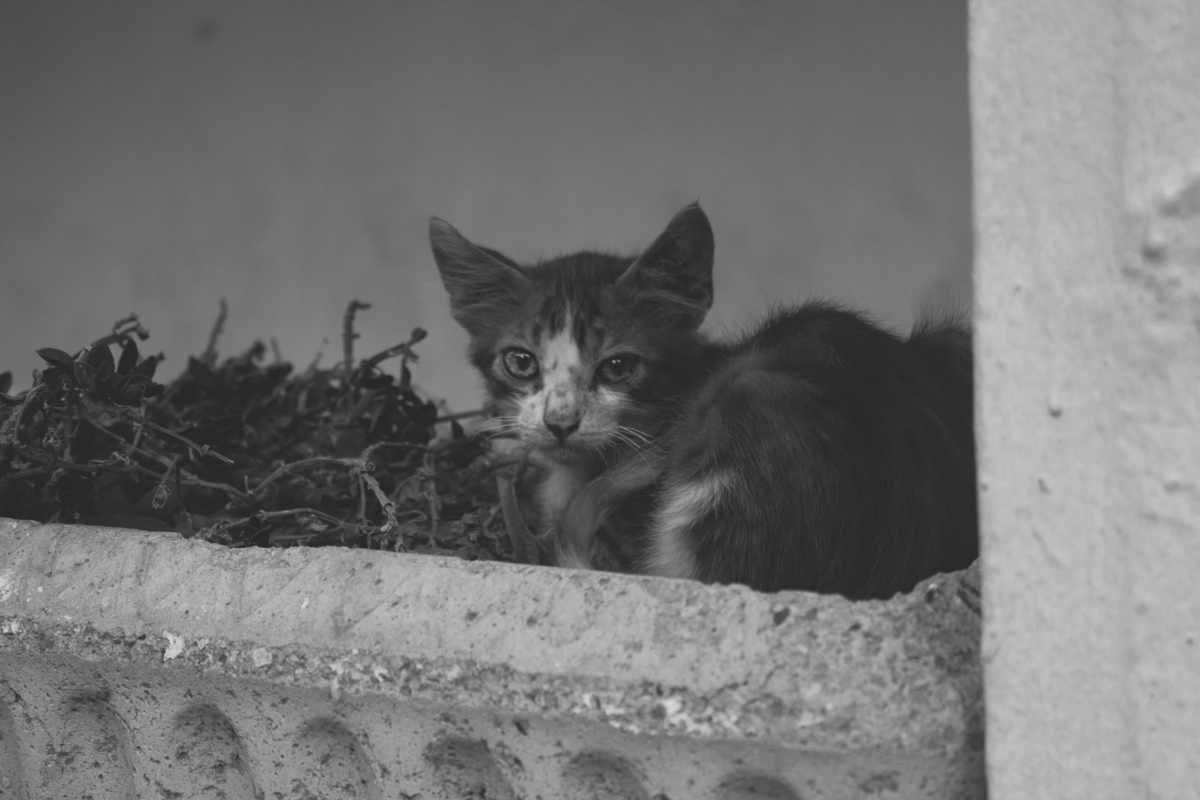 Photography by Ine PH. - A cat in Tunisia // 2013