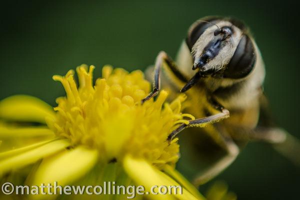Matthew Collinge Photography -
