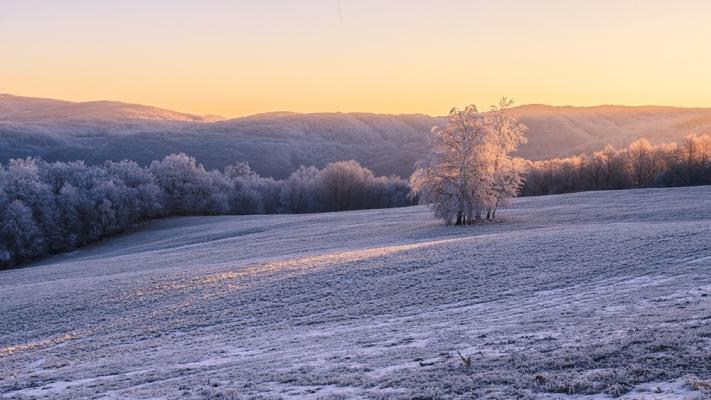Michal Piatrov - Zimný strom