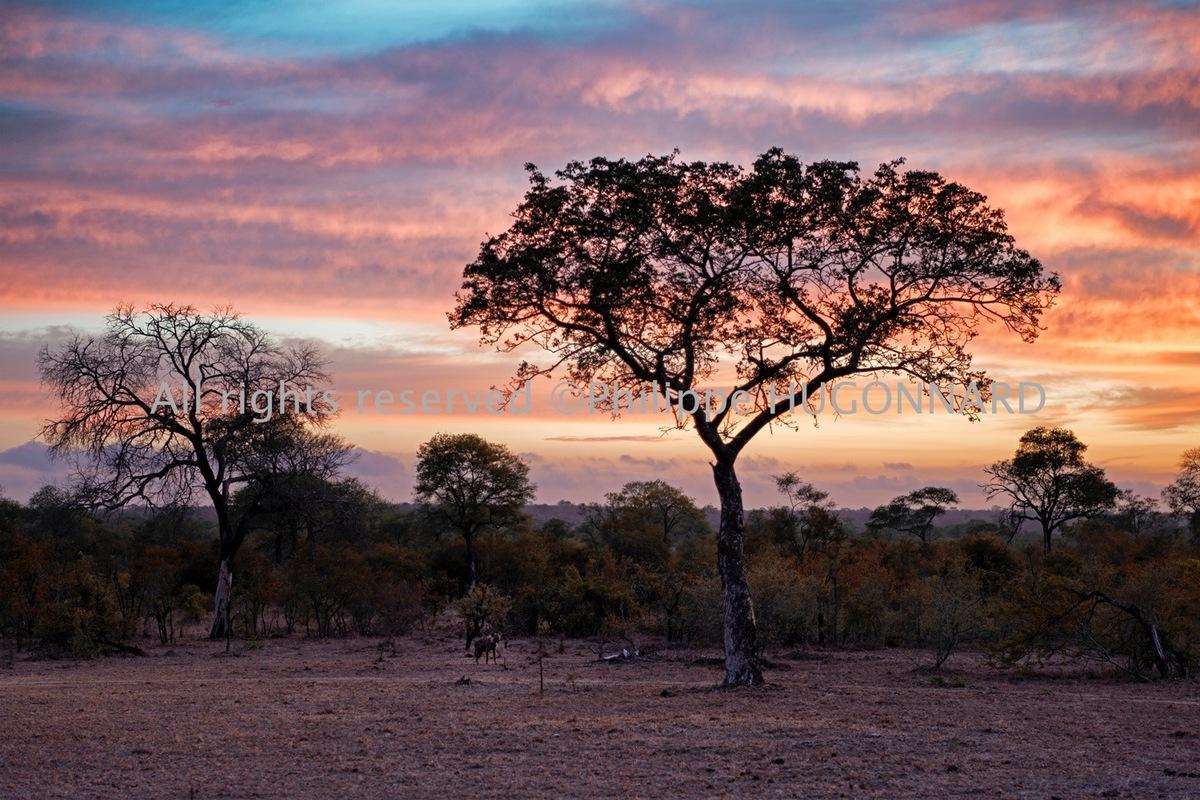 Philippe Hugonnard Photography - La série «Awesome South Africa» par Philippe Hugonnard met en exergue l'inépuisable beauté de cette nation Arc-en–ciel, qu'est l'Afrique du Sud. Entre terre et mer, faune et flore, une multitude de reliefs et de paysages se révèlent sous son objectif. Les couleurs contrastées sont franches. La vie animale et végétale est ici traitée avec profusion, du Big Five aux animaux les plus énigmatiques. Du parc Kruger à Cap Town, en passant par Durban… Découvrez la richesse de ce pays du Sud.