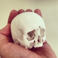 3D Anatomical Modelling by Dr Hugh Harvey
