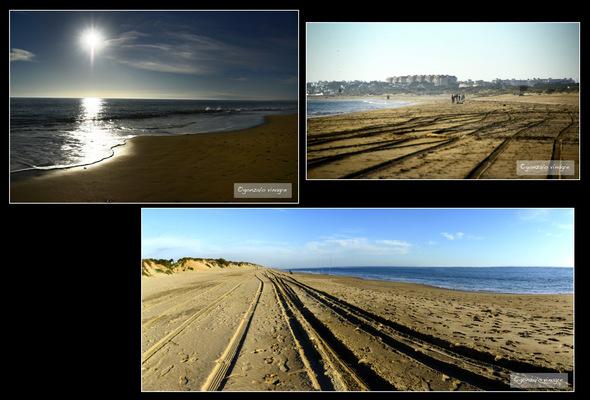 Fotografias - Paraje Natural de los Enebrales (Punta-Umbria) -1-