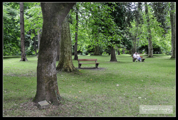 Fotografias - jardin