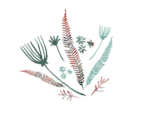 mistercharlesworthdesign - Ferns Digital Print