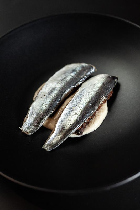igor haloszka -
