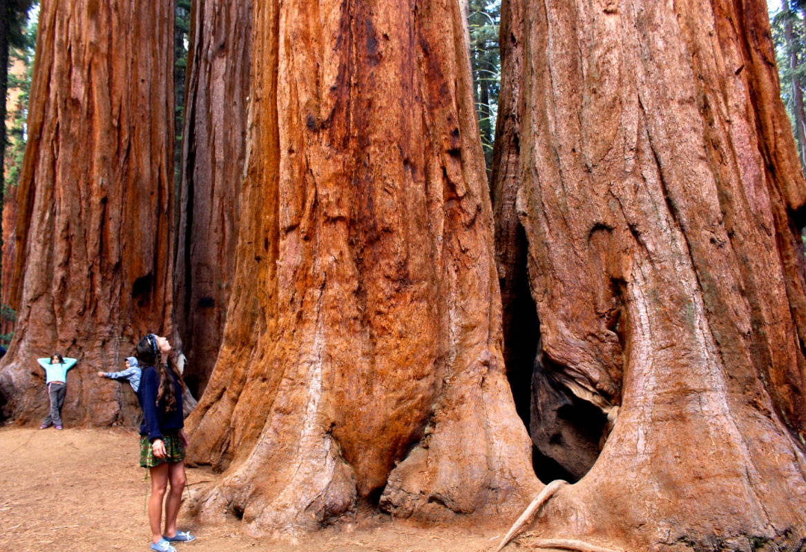 Genevieve French Photography - Sequoia National Park, California