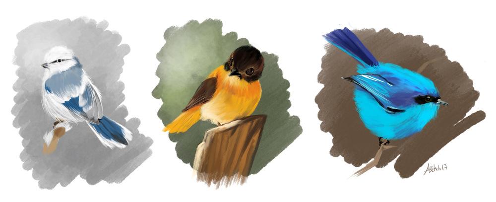Aurélie Betsch Illustrations - Oiseaux