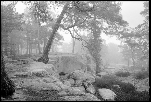 frederic dargelas photographer in Helsinki. Photography artwork. - At the edge of the forest
