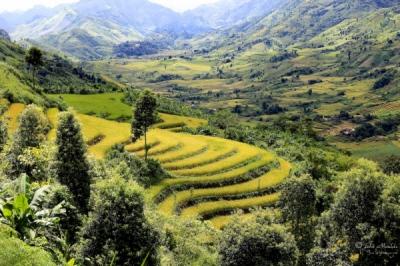 face of vietnam - Ma Quai Thang, Lai Chau