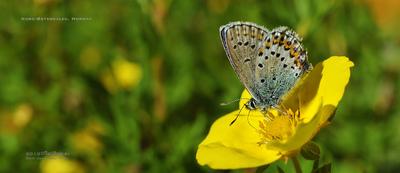 MacWhale.eu photography (Geir Joar Meli Hval) - Madame butterfly