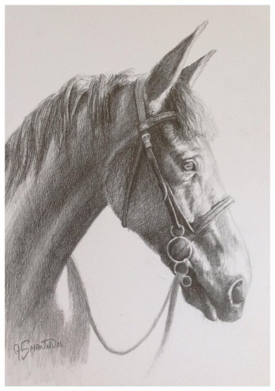 Andrew Shannon Art - Poppy - A4 Pencil Sketch