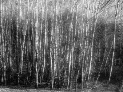 Laura Eriksen - Dark Spring