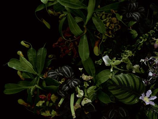 Maren Boerner image editing - Rosenthal