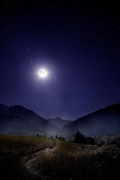Enchanted Nights -