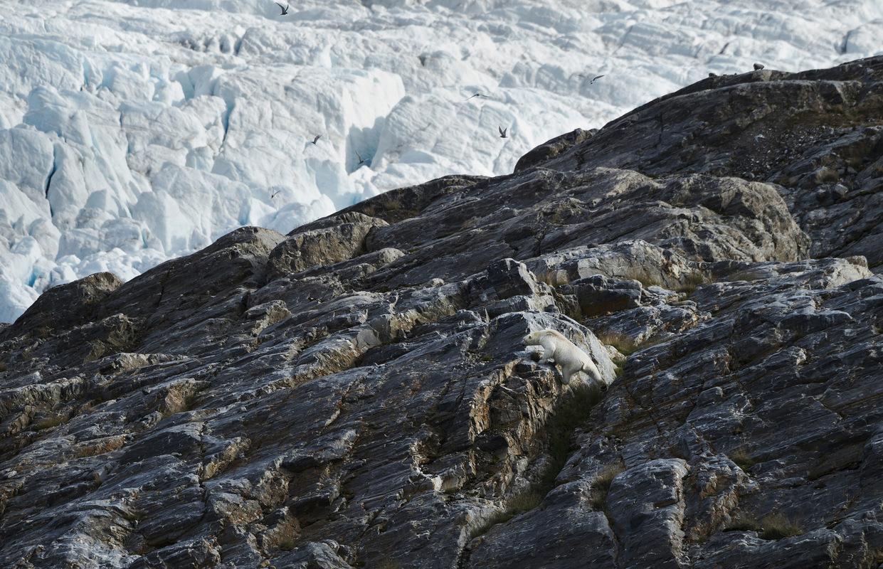 Photographer Anna Tärnhuvud - Svalbard, 2016.