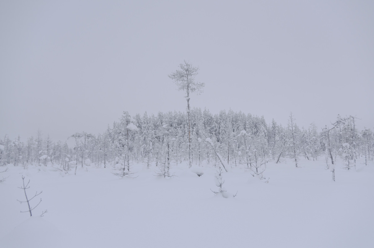 Photographer Anna Tärnhuvud - Teurajärvi, Korpilombolo.
