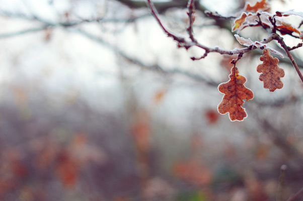 Blown A Wish Photography - Autumn Turns to Winter (2014)