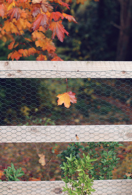 Blown A Wish Photography - Stuck on the Fence (2015)