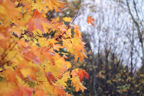 Blown A Wish Photography - Orange Leaves (2015)