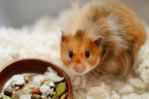 Blown A Wish Photography - Simon the Hamster (2014)