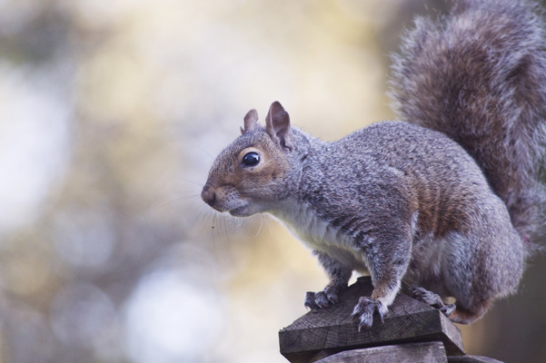 Blown A Wish Photography - A Squirrel (2016)