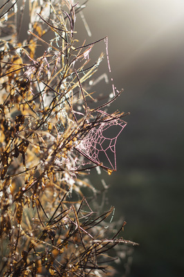 Blown A Wish Photography - Cobweb in the mist (2016)