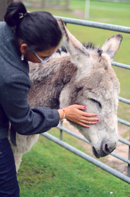 Blown A Wish Photography - Shazia Petting a Donkey (2014)