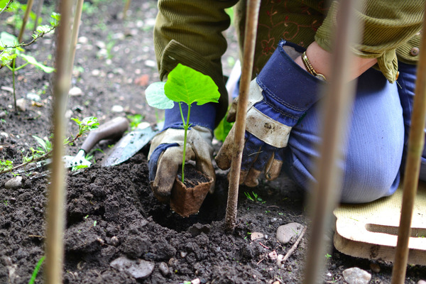 Blown A Wish Photography - Planting the Runner Beans (2013)