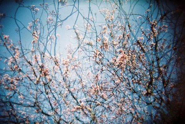 Blown A Wish Photography - Double Blossom (2014)
