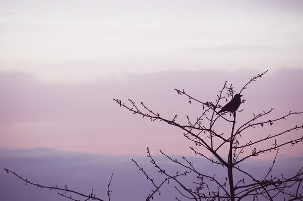 Blown A Wish Photography - 6/52 Crow at Sunset (2017)