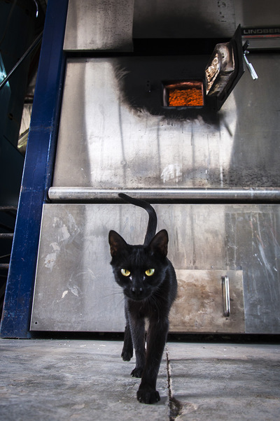 nicolascarvalhoochoa - A cat lurks in the cremation room of a private cementery in the province of Buenos Aires. The ovens reach temperatures between 800 and 1000 degrees celsius. Cremations began in prehistoric times and in recents decades has become a trend in Argentina. Today, cremations outnumber burials due to economic reasons.