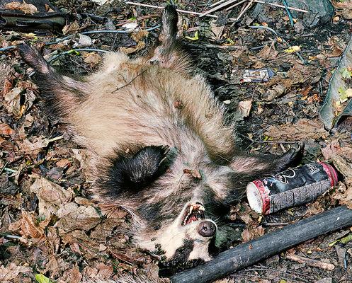 Leif Claesson - Poisoned badger family (detail)