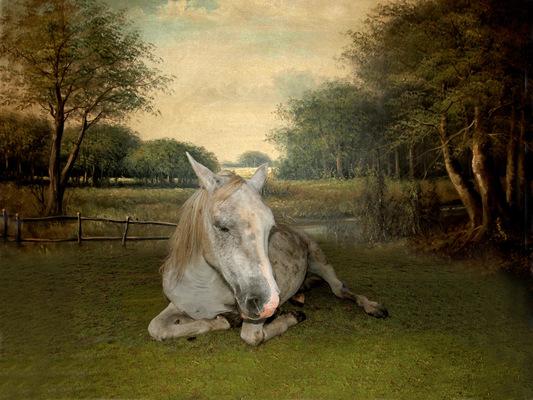 Lotte Agger - hest
