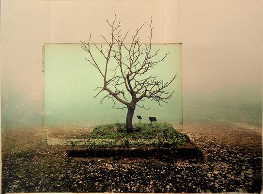 Lotte Agger - Træet