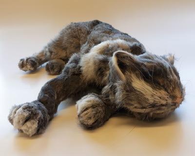 Maantyttäret - Fake cat fot tv-series Suden hetki