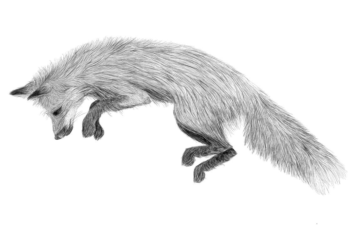 Lara-Jane van Antwerpen - Fox Illustration