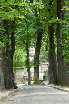 Margaret Denning Art & Photography - Tall Trees, Pere Lachaise Cemetary, Paris