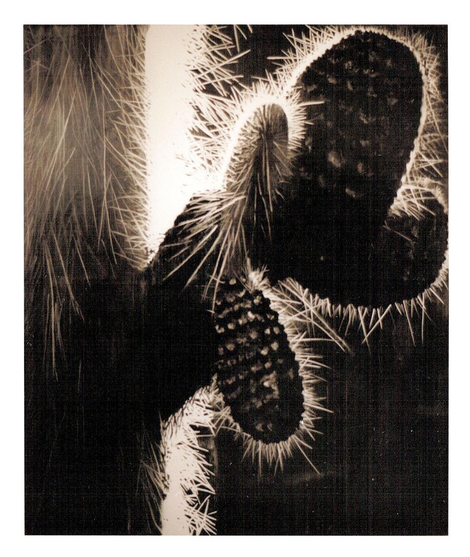 Portfolio - Gabriela Fer - óleo