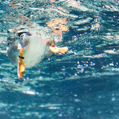 Mondfuchs - Art & Design - Just swimming