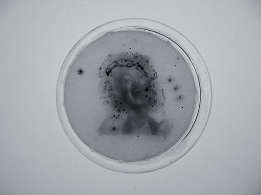 elizabethhale - Petri*