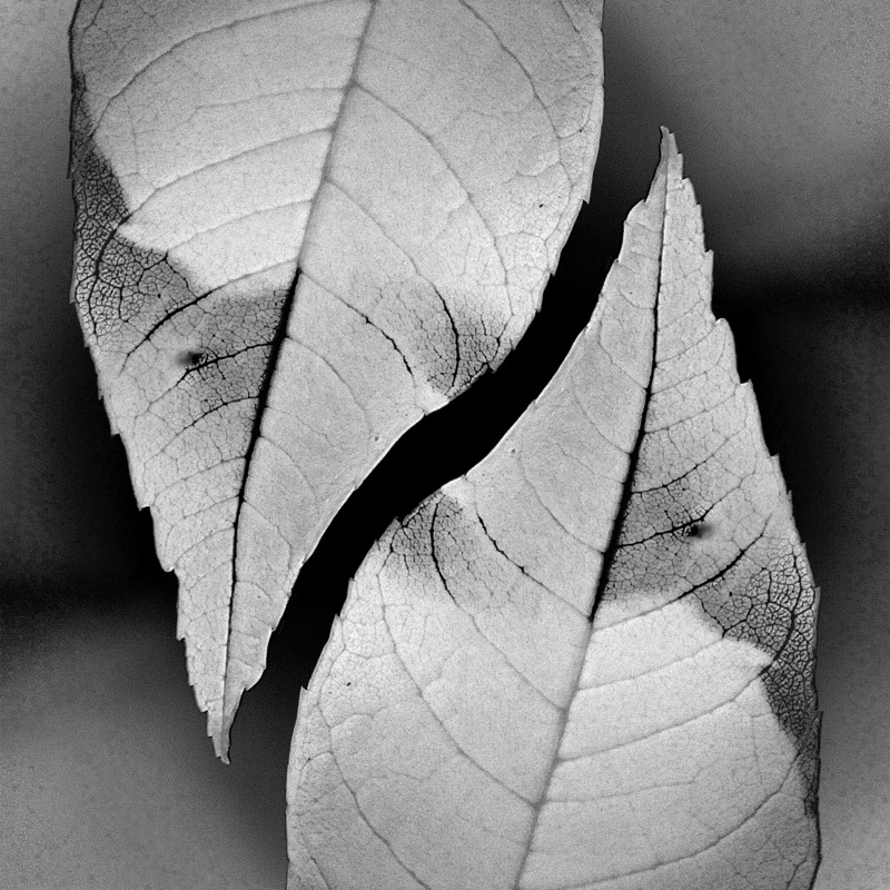Creative Bytes Images - Two Leaves