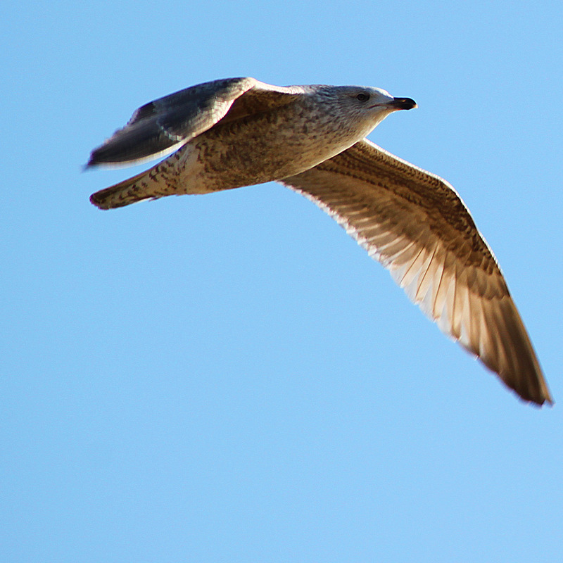 Creative Bytes Images - Young Bird in Flight