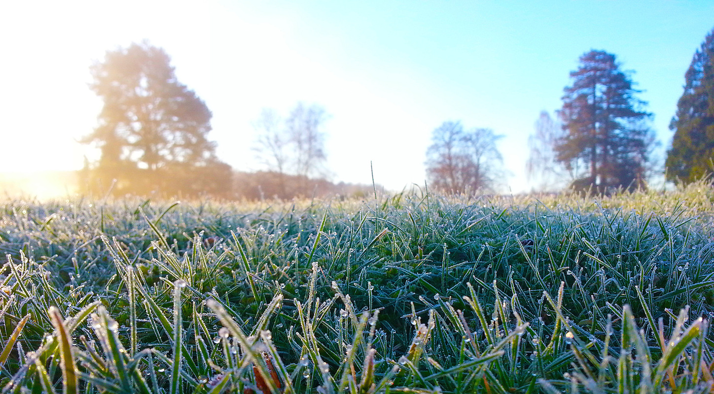 Creative Bytes Images - Crisp Early Morning Frost