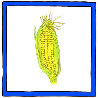 Maaike Boven - maïs