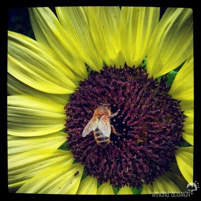 Charline Mahroug -